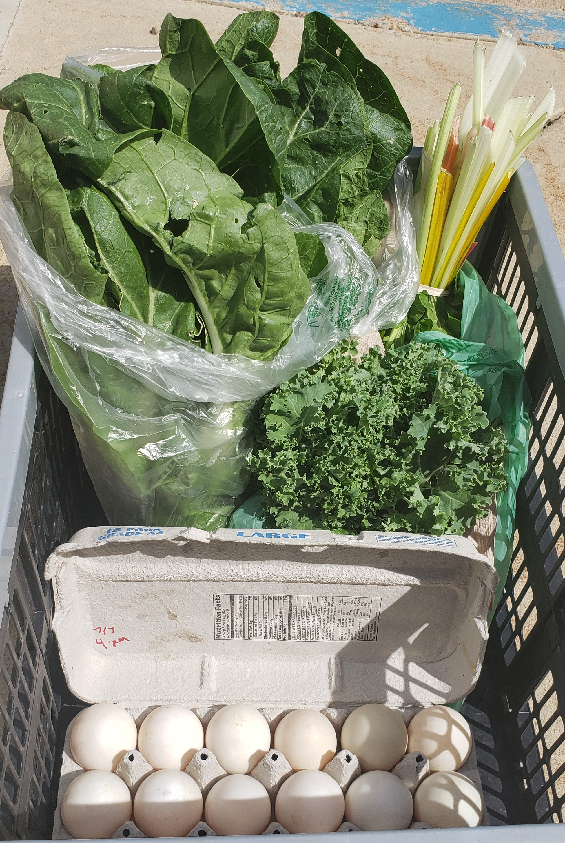 Reducing Food Waste: from the Garden to the Kitchen