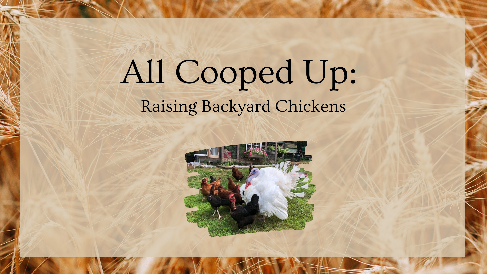 All Cooped Up: Raising Backyard Chickens, Ages 7+