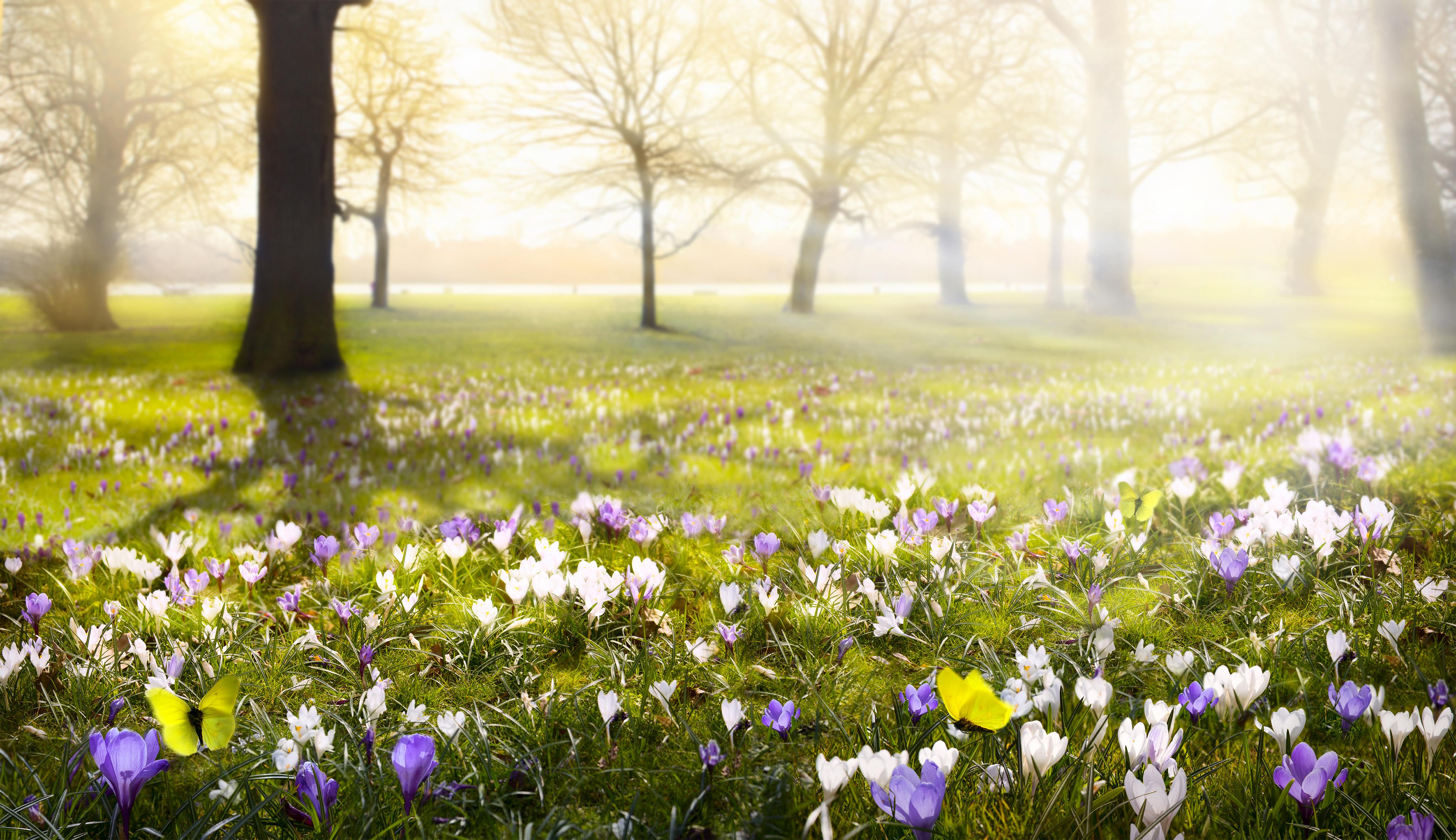 Spring Teaching Forum