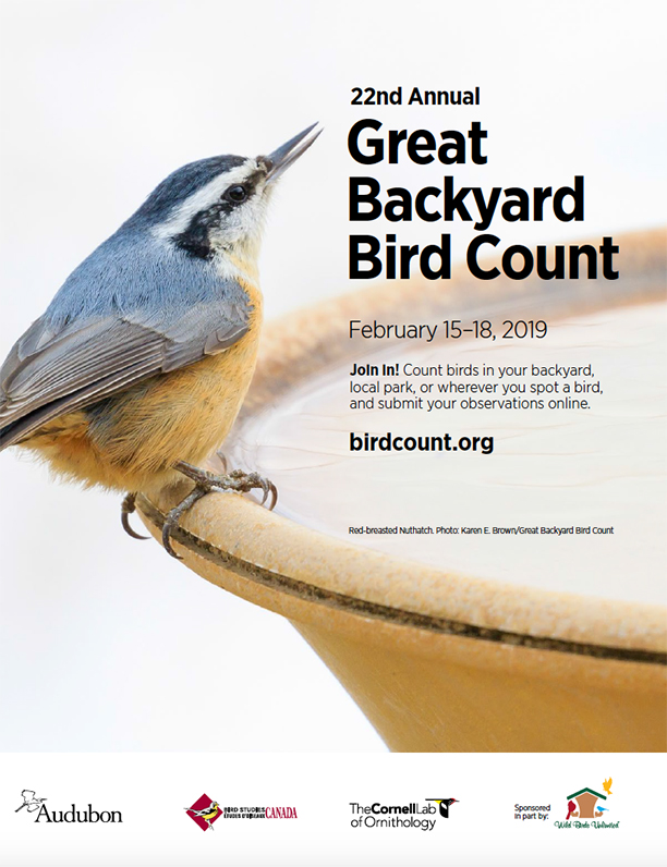 Great Backyard Bird Count!
