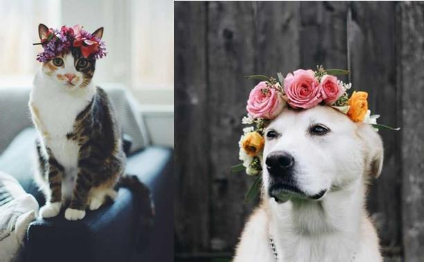 Creating Flower Crowns For Animals