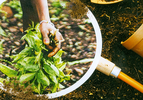 Become a City Gardener!