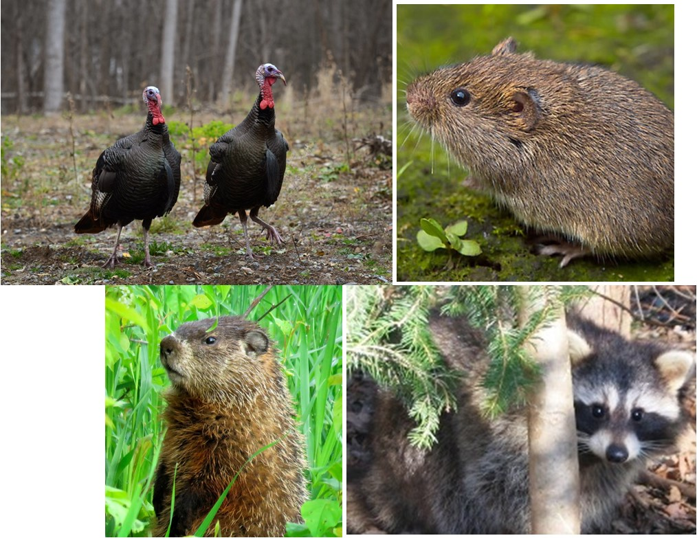 Learn About Backyard Wildlife in NYS