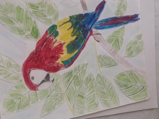 Drawing a Colorful Parrot