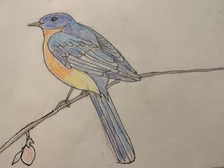 Beginning Drawing: Drawing a Bird
