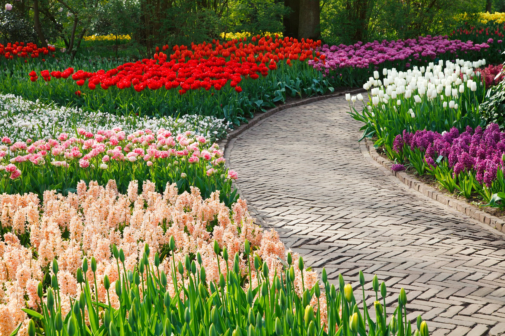 Holland: Tiptoe Through the Tulips