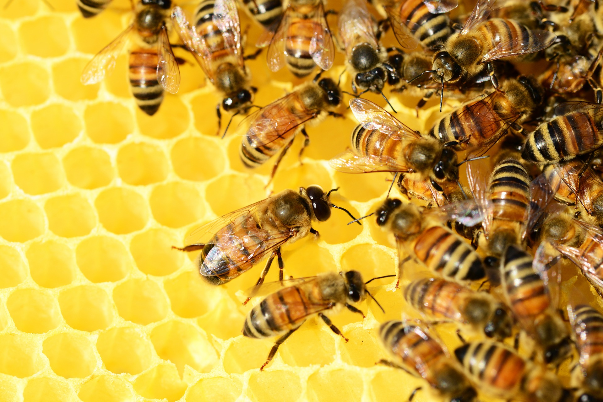 Hive Alive: The Amazing Honey Bee