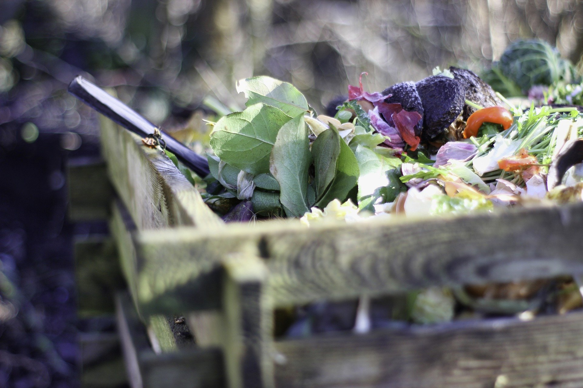 Basics of Organic Composting (virtual)