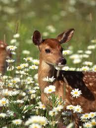 Genesee Land Trust presents Deer in the Garden