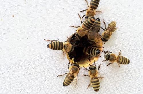 Bees! With Seaway Trail Honey Zoom Program