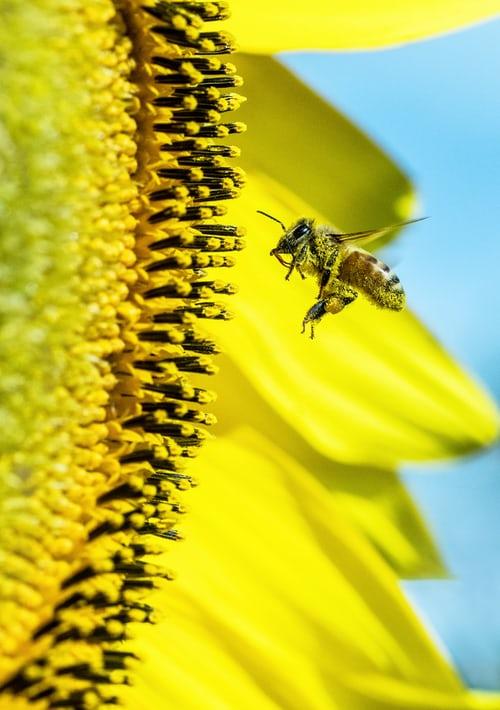 Zoom Program: Pollinator Plantings