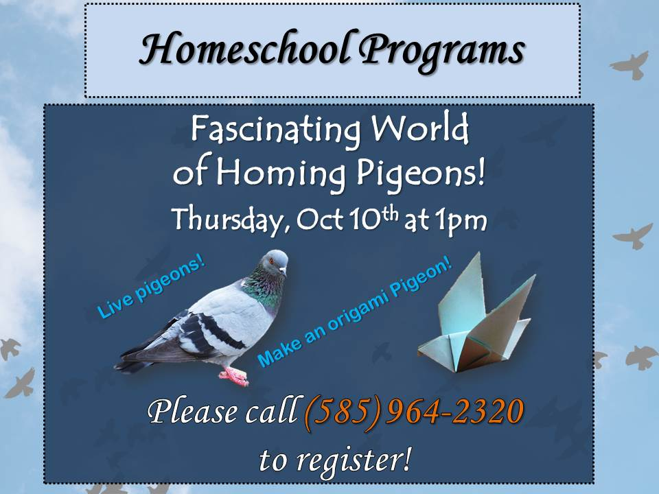 Homeschoolers @ the Library - Baby Pigeon meet and greet