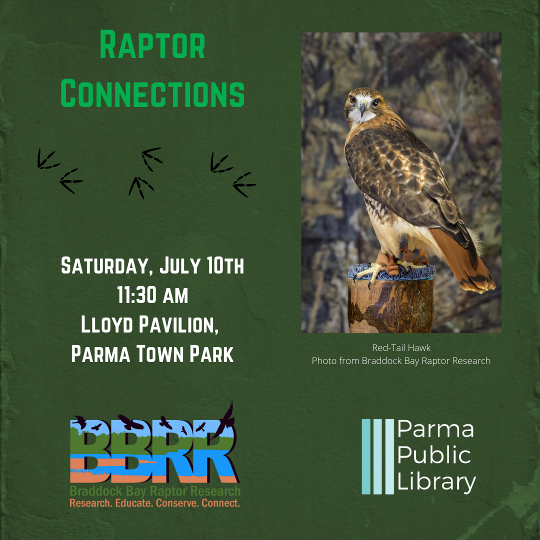 Raptor Connections (Parma Town Park) - IN PERSON