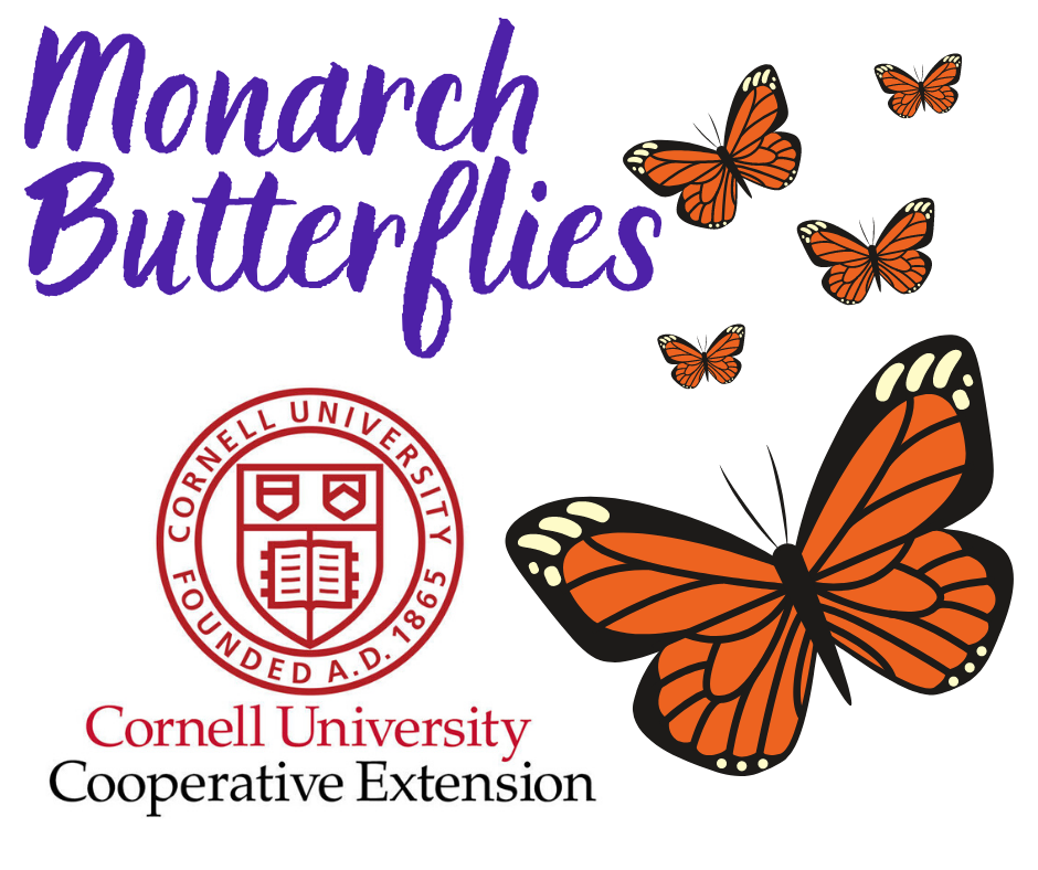 Monarch Butterflies with Cornell Cooperative Extension