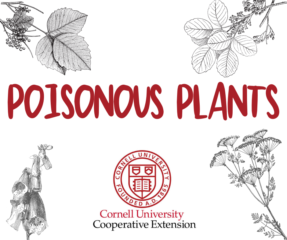 Poisonous Plants with Cornell Cooperative Extension