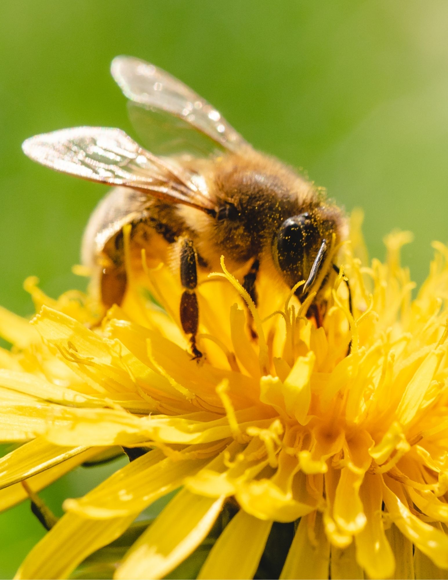 Beginning Beekeeping- An Overview