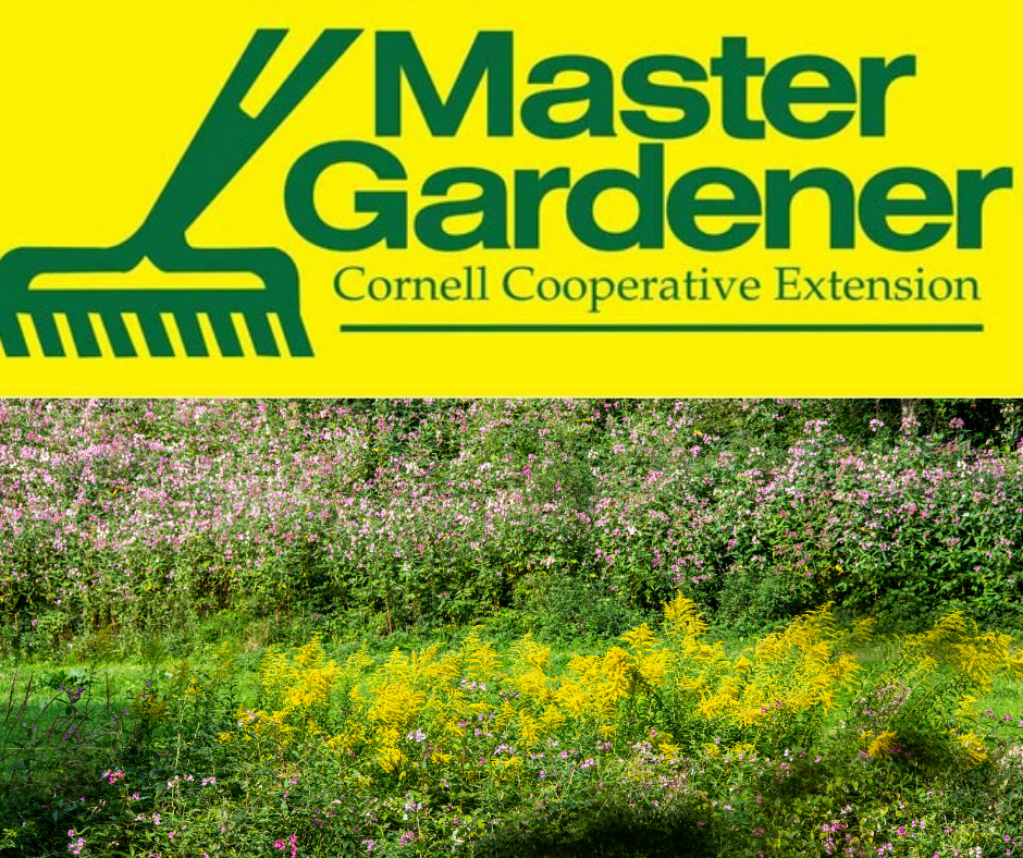 Invasive Plants with Cornell Cooperative Extension