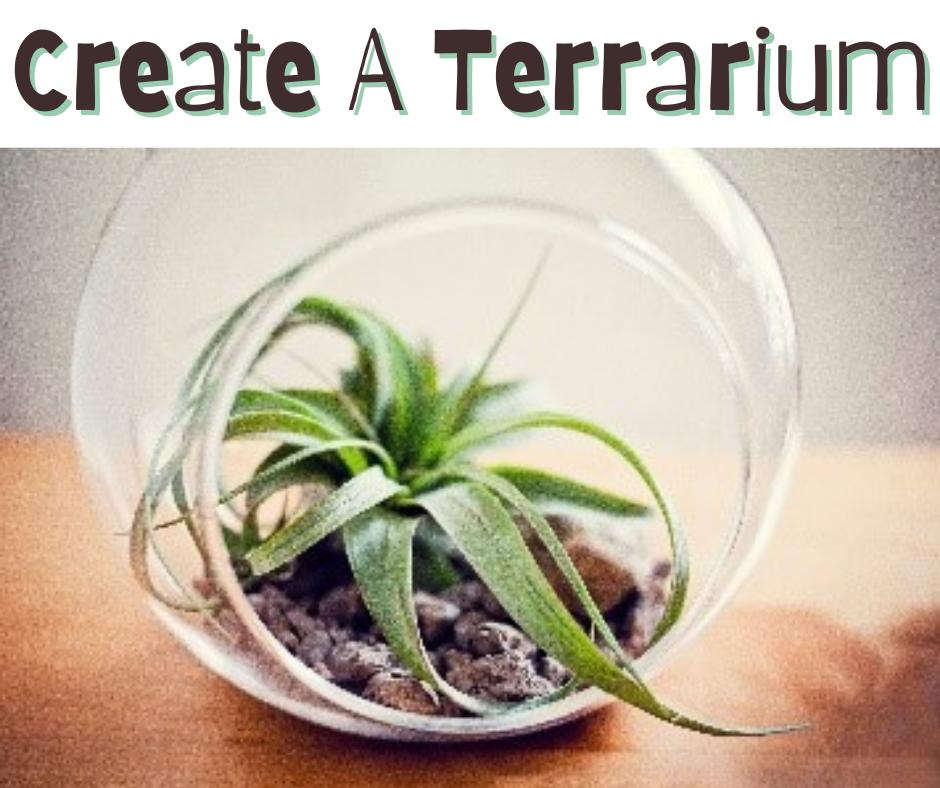 Create a Terrarium (7:00 PM CLASS)