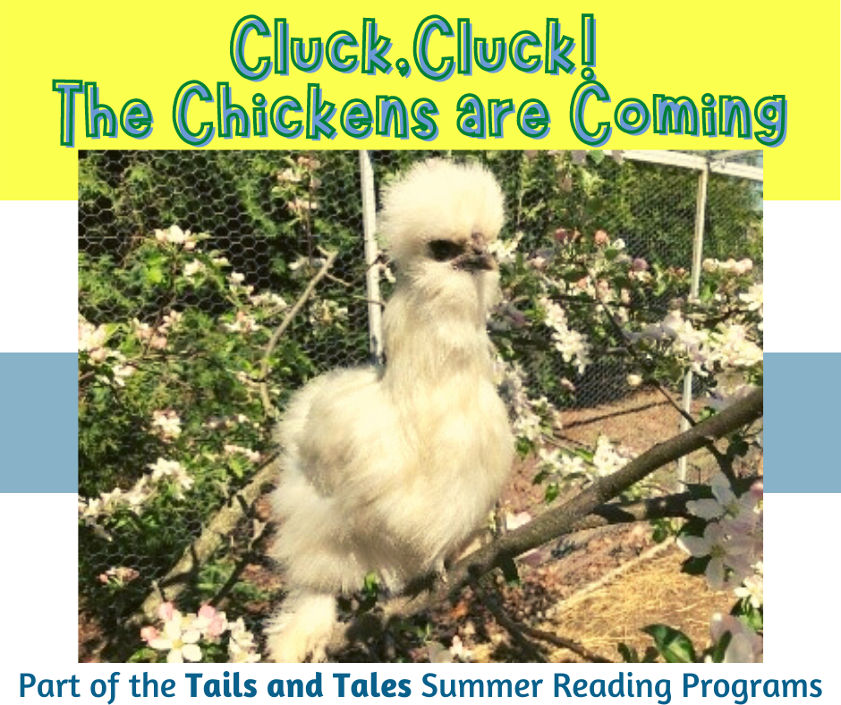 Cluck,Cluck! The Chickens are Coming!