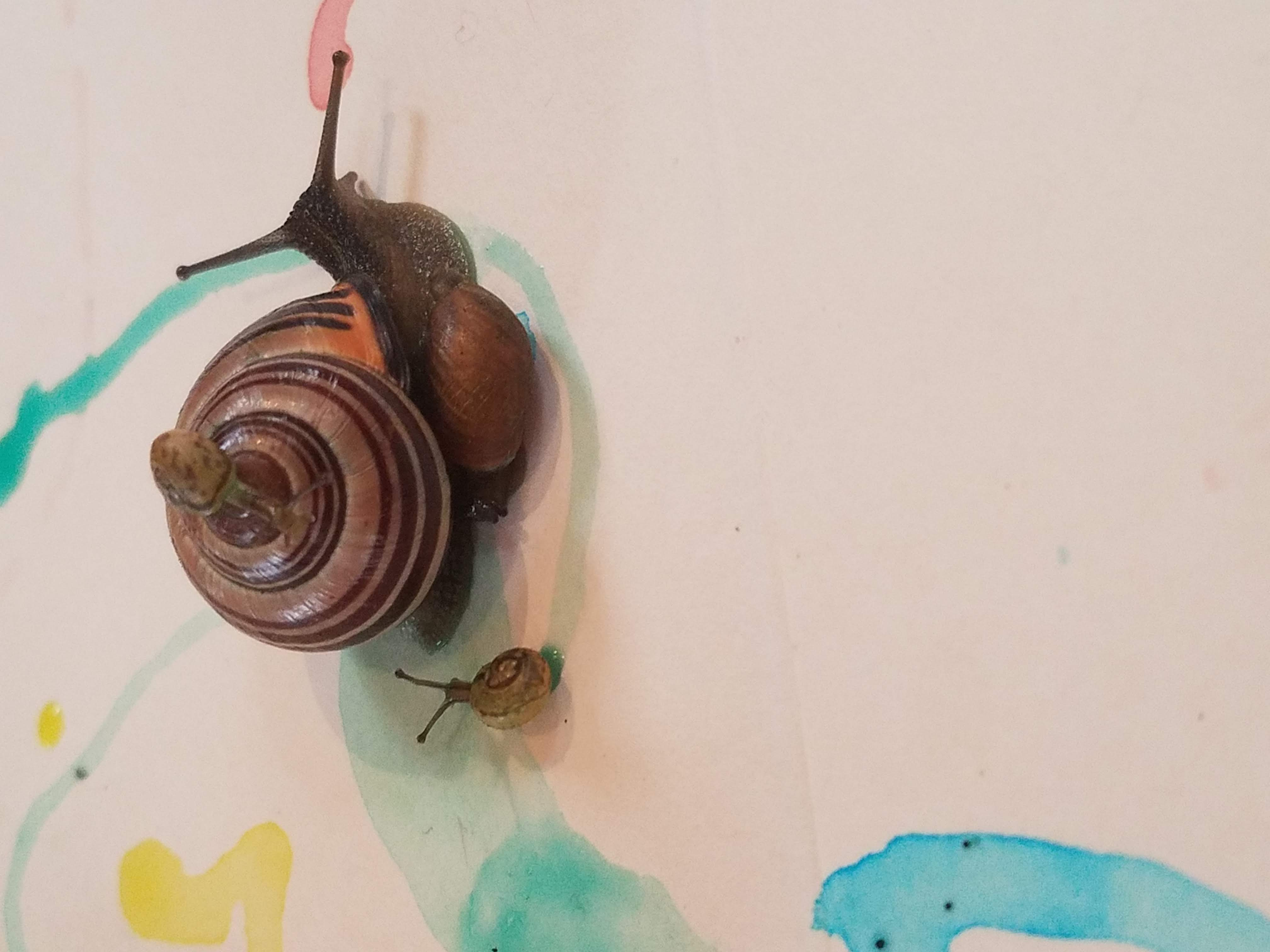 Creating Stationary with Sister Snail