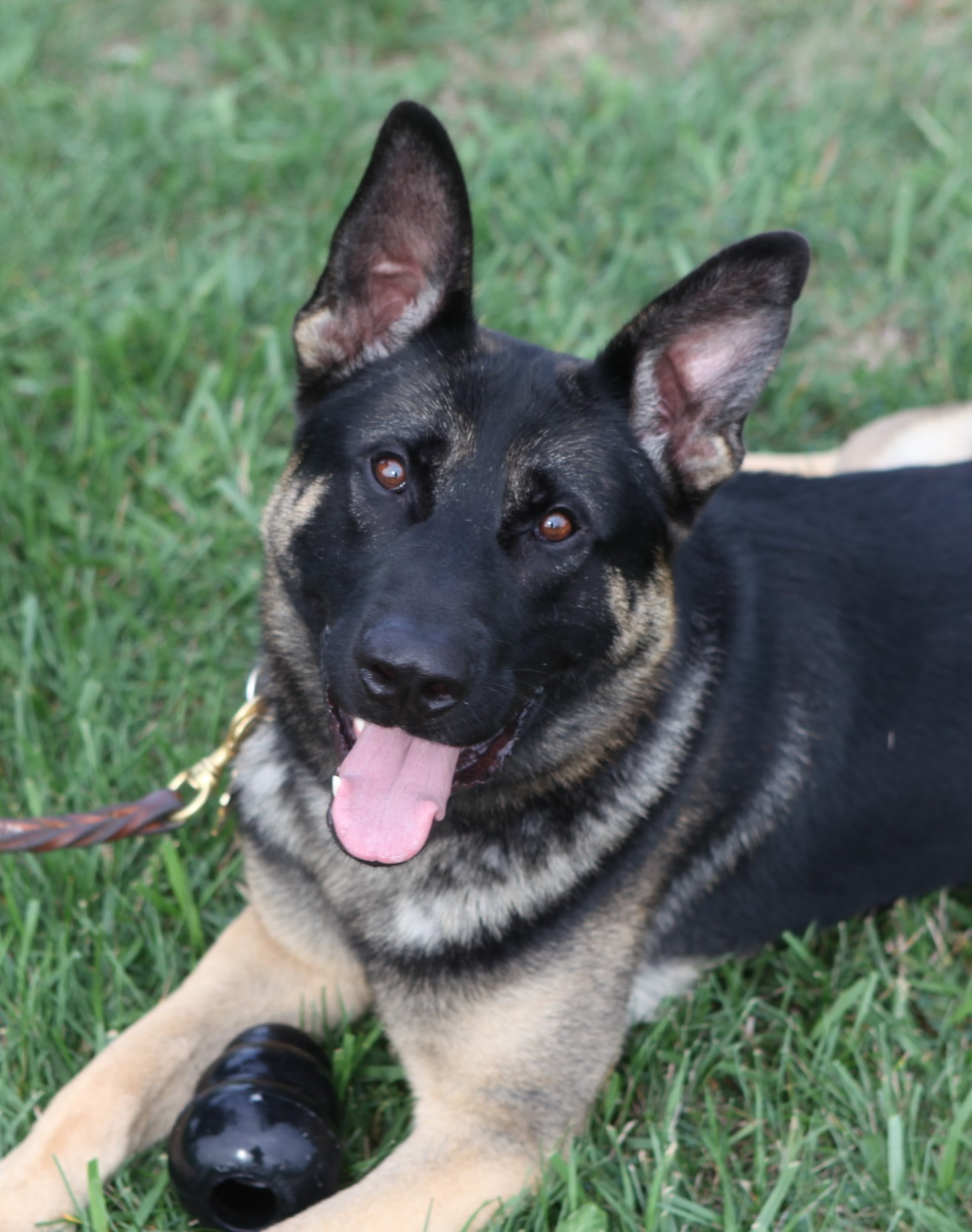 Meet K9 Baro and Learn about US Border Patrol K9 Unit