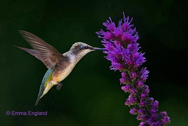 Celebration of World Migratory Bird Day!
