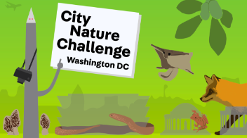 Backyard Nature: Learning iNaturalist!