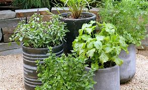 Spice it up:  Herb Gardening!