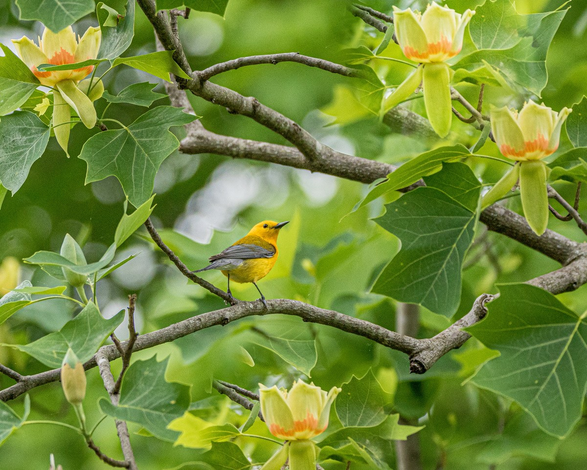 SPRING PHOTO SAFARI: Where to find the best birds, buds, & beasts
