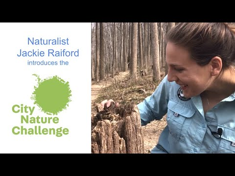 Become a Community Scientist this Earth Day: Join the City Nature Challenge!