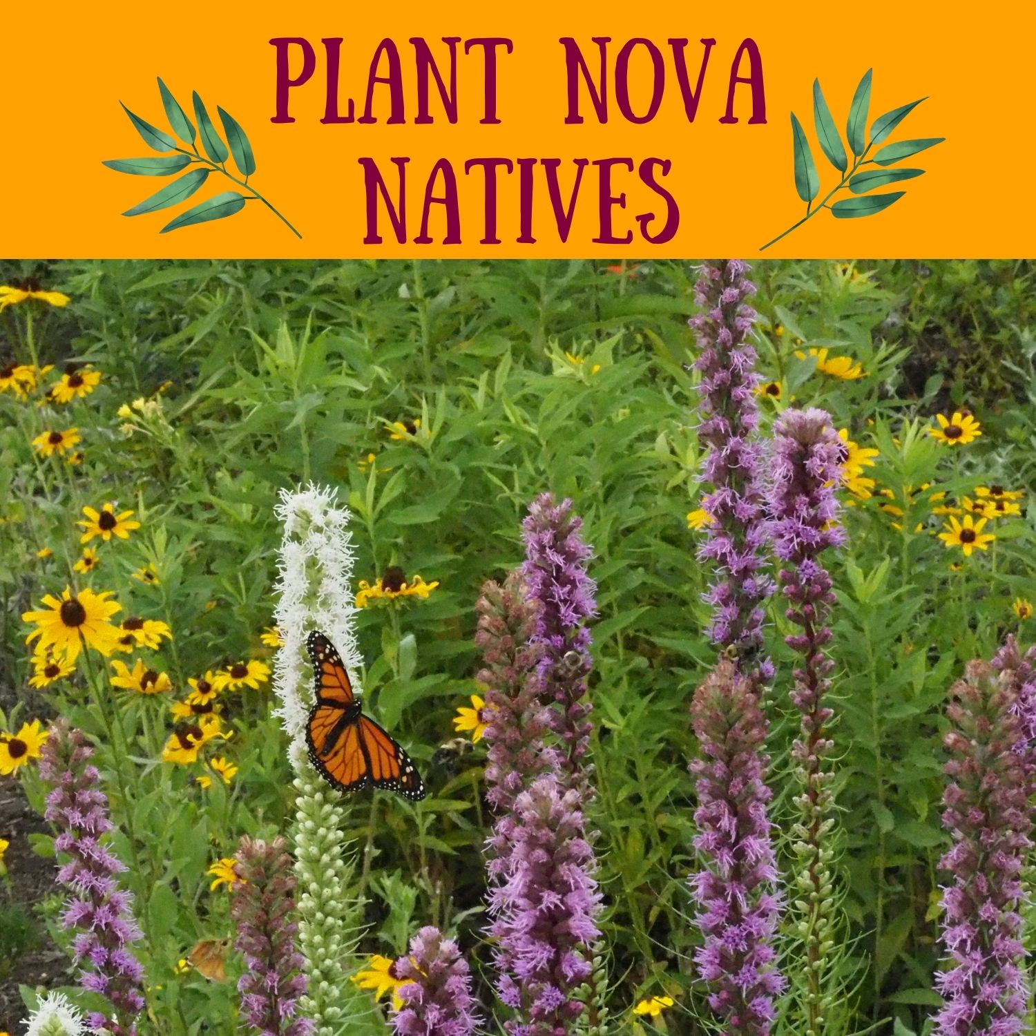 Pollinator Gardens for Earth Renewal