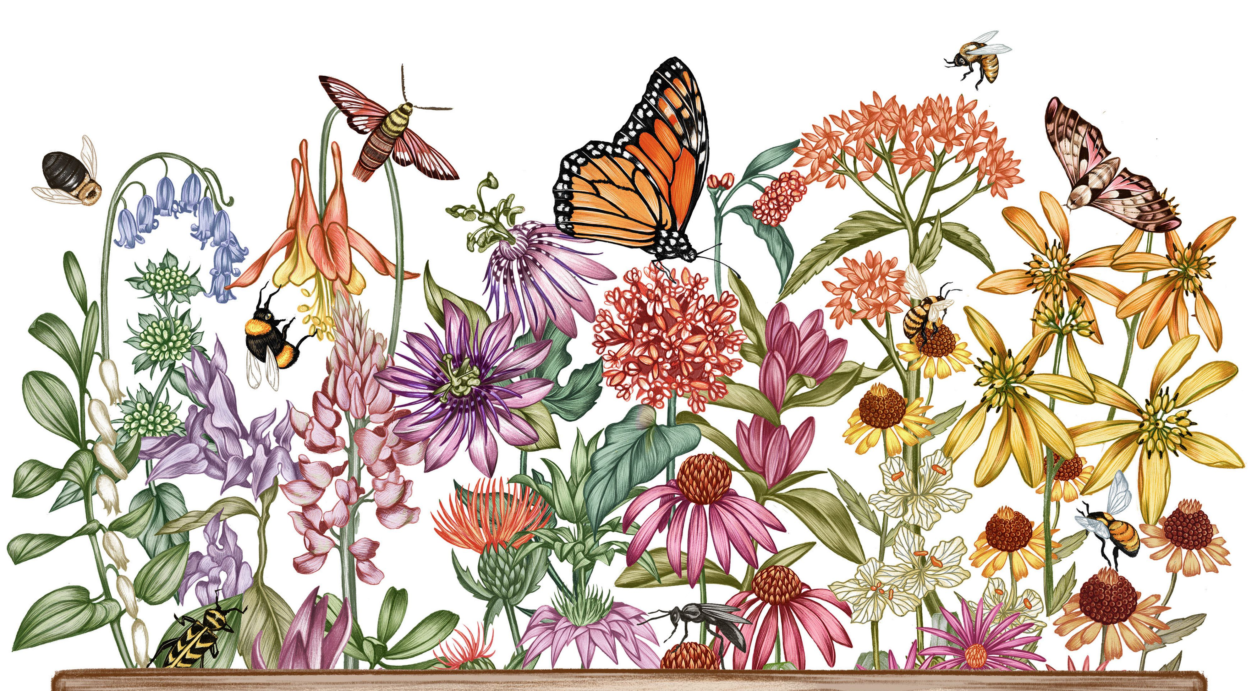 CANCELLED: Attract Pollinators To Your Garden