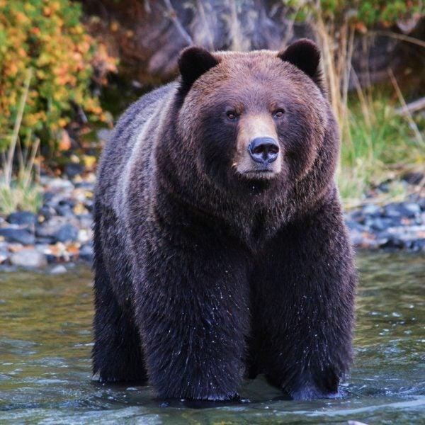 Kids' Trivia About Bears