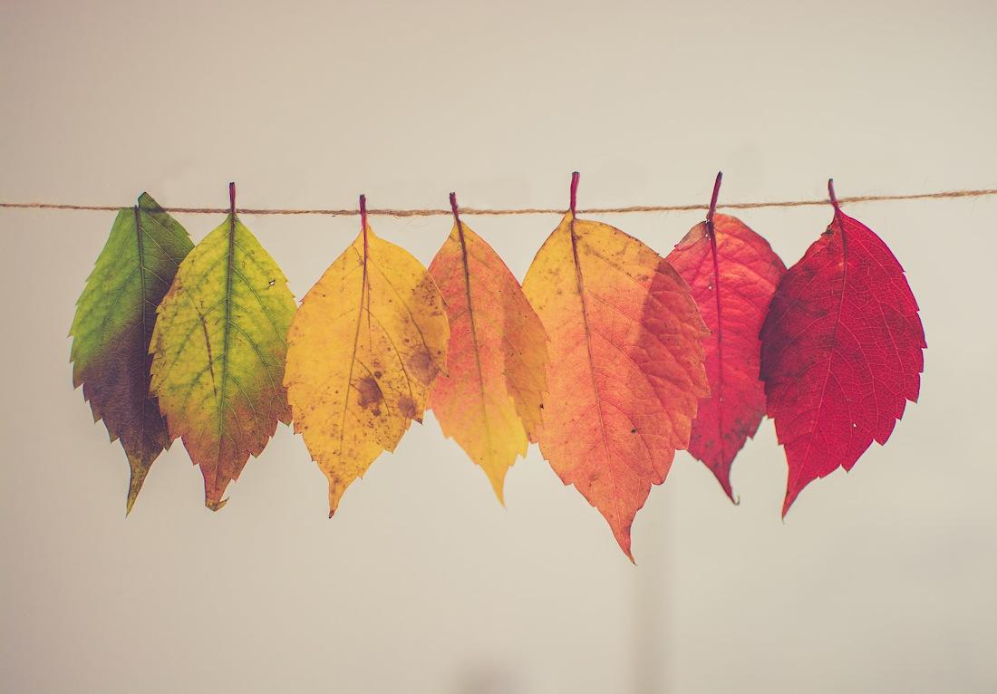 Hello Autumn Storytime