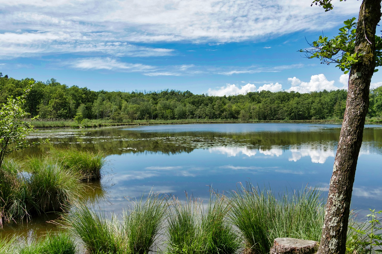 AAUW Partnership:  Fighting Climate Change in Fairfax County