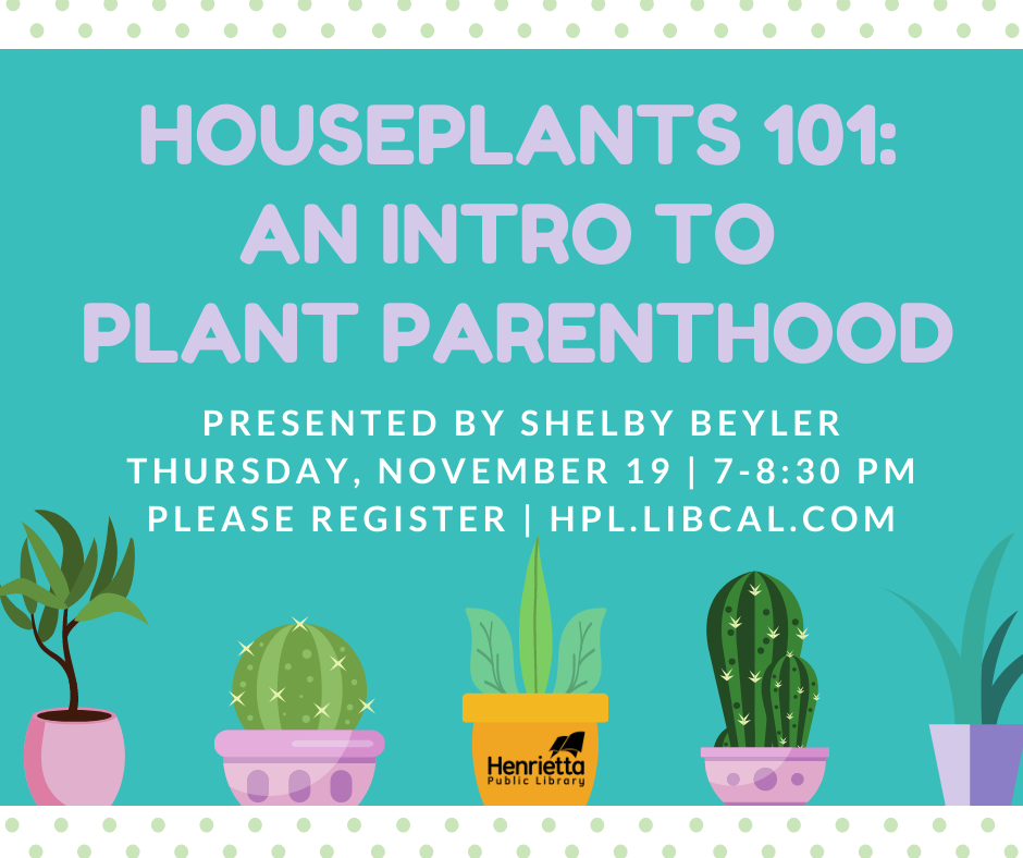 Houseplants 101: An Introduction to Plant Parenthood