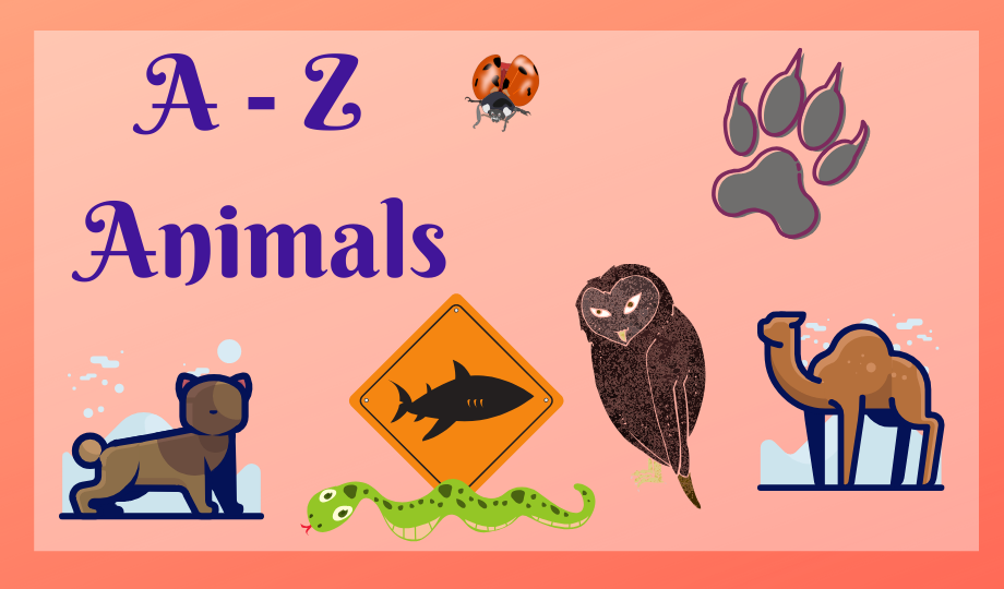 CANCELLED: A-Z Animals