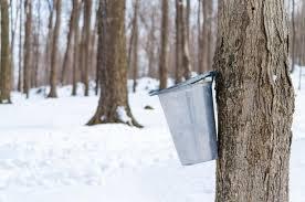Tap My Tree (Mannington)