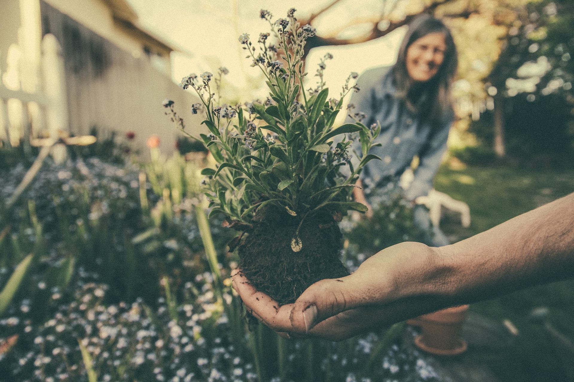 Three Keys to Garden Planning