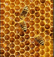 Beekeeping Basics a Free Presentation by the Ottawa Public Library