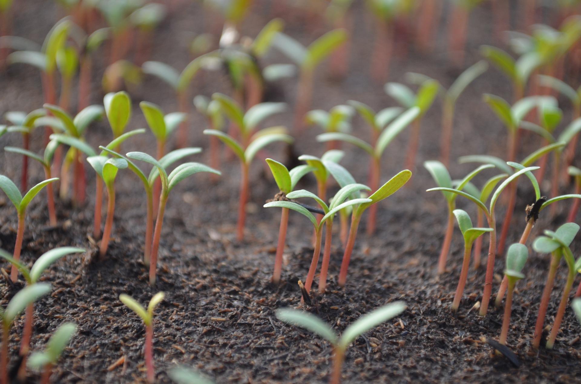Master Gardener- Seed Germination