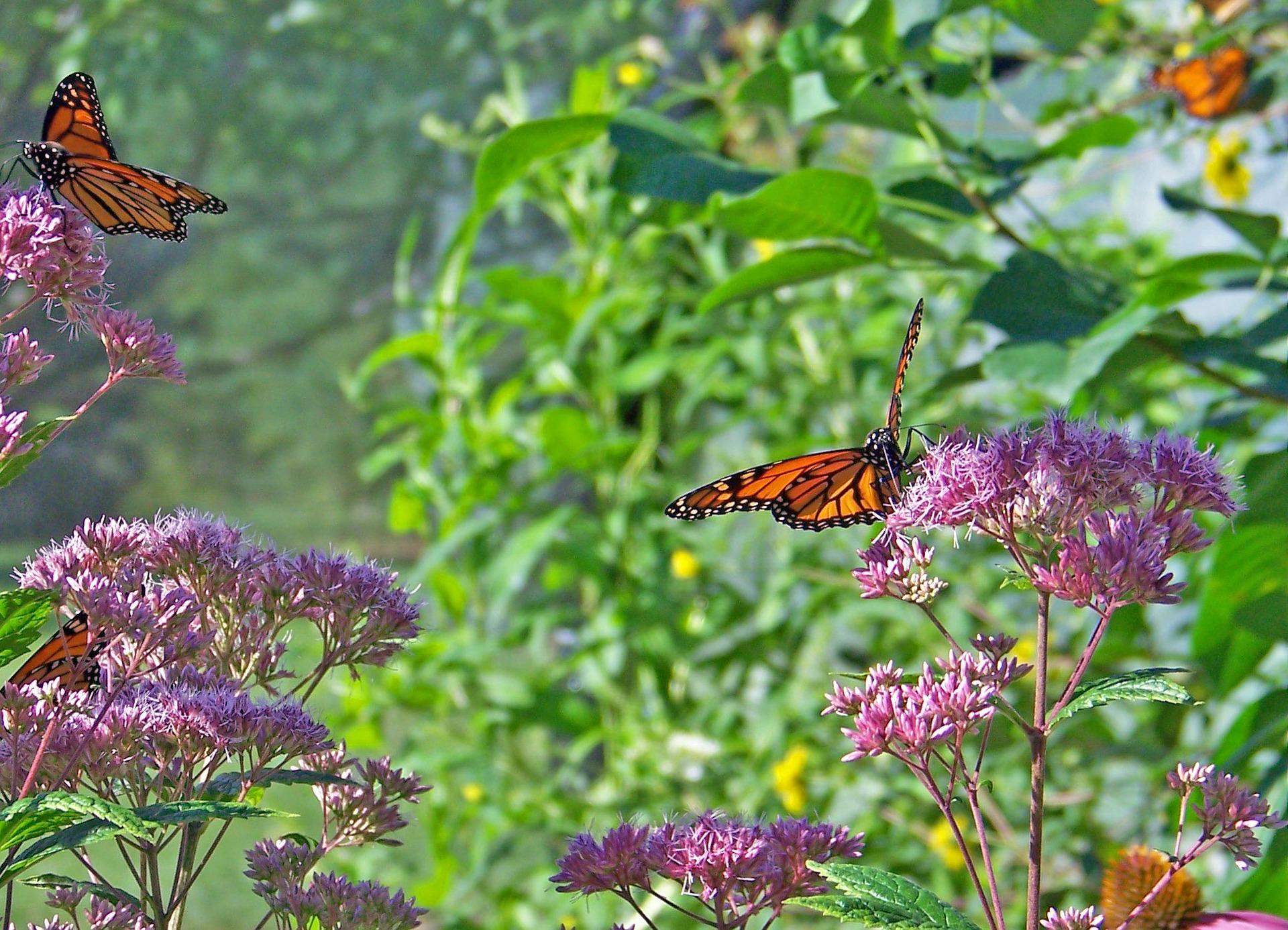 Master Gardener: Landscaping for Restoration and Recreation