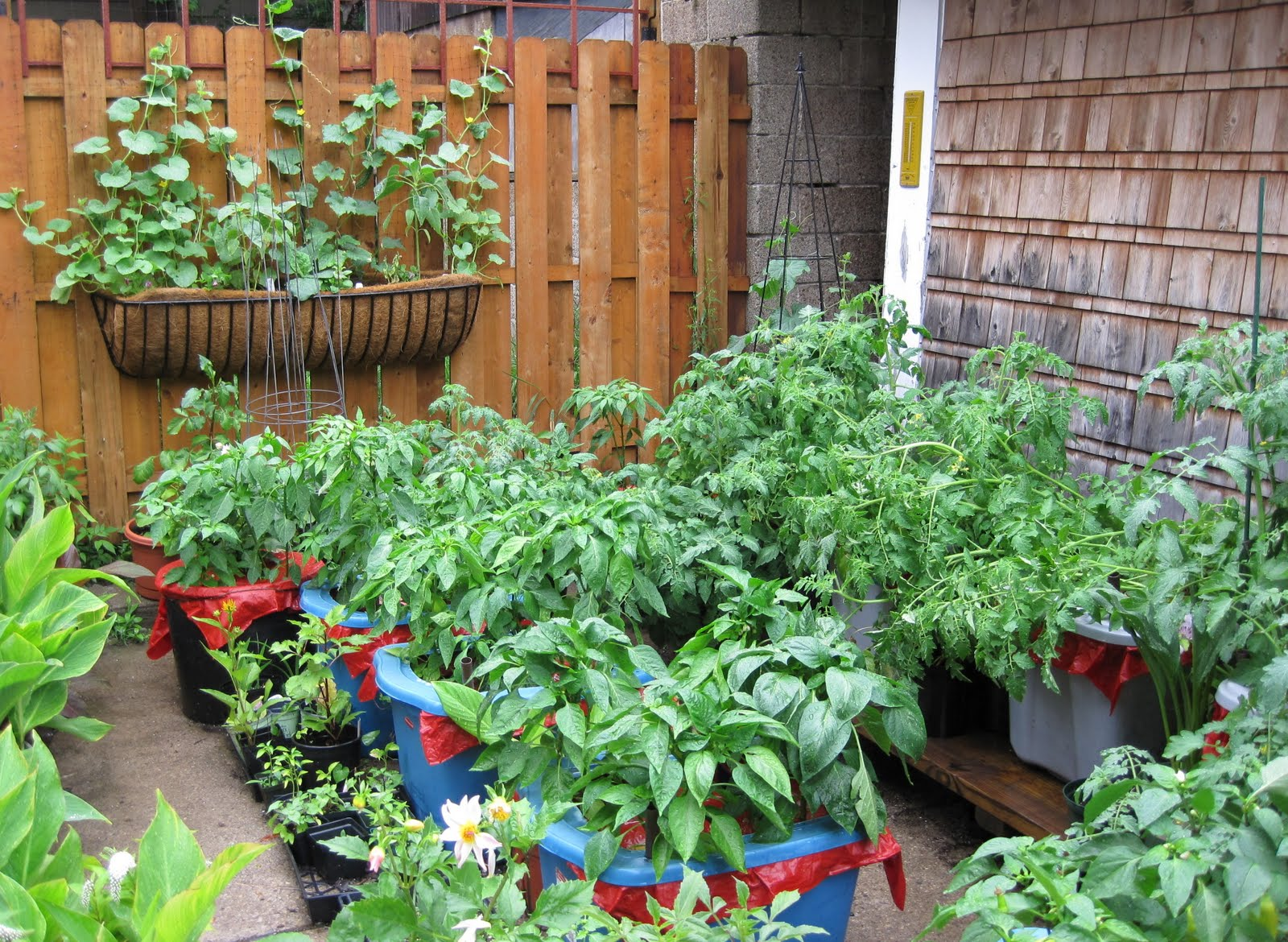 Big Gardens in Small Spaces: Adventures in Container Gardening