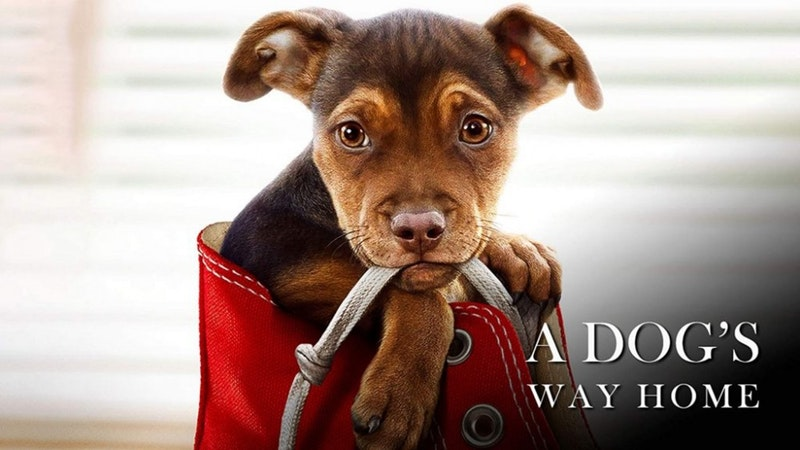 Summer Movie: A Dog's Way Home
