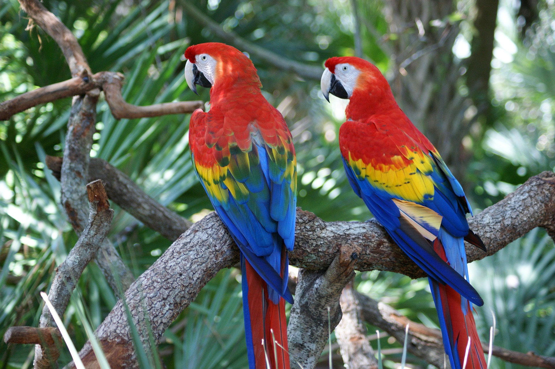 Wildmind Science: Spirit of the Rainforest