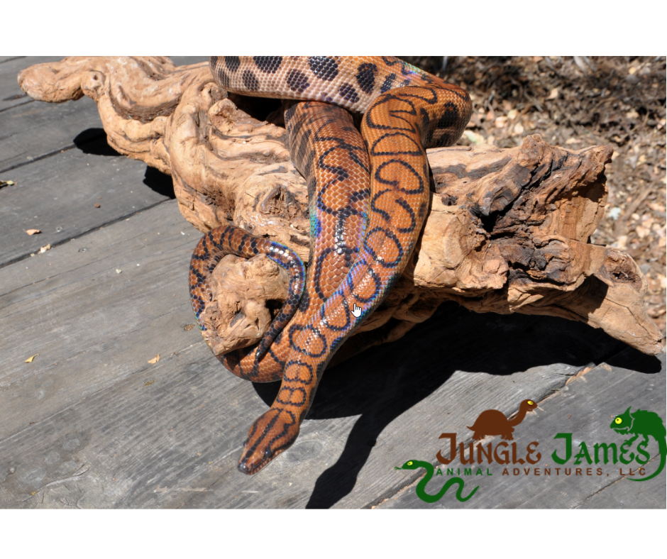 Jungle James Reptile Adventure