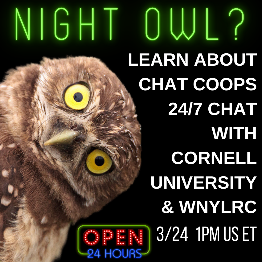 Learning Lab: Creating Your Own Local Co-Op with LibChat