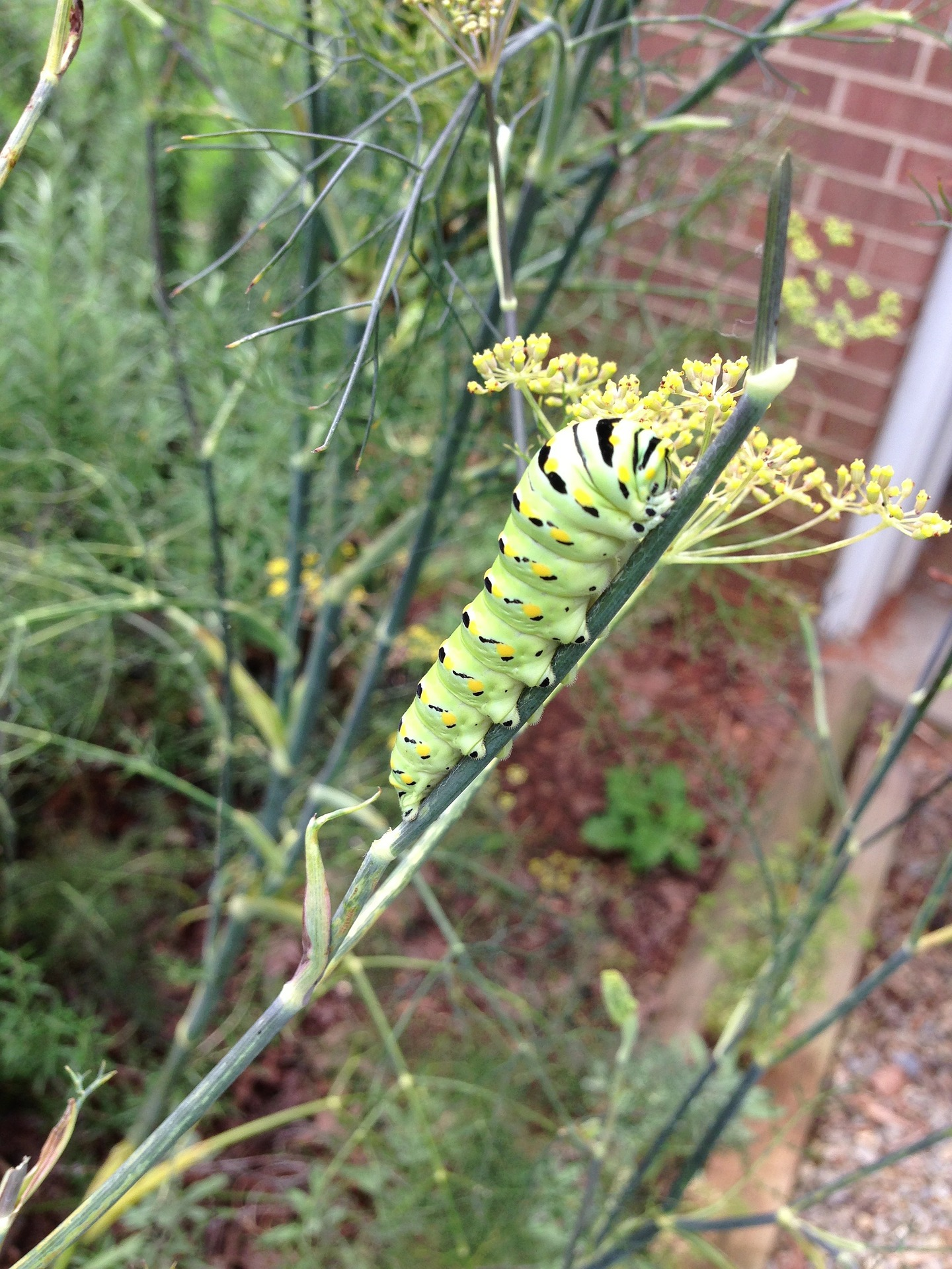Happy Birthday Very Hungry Caterpillar!