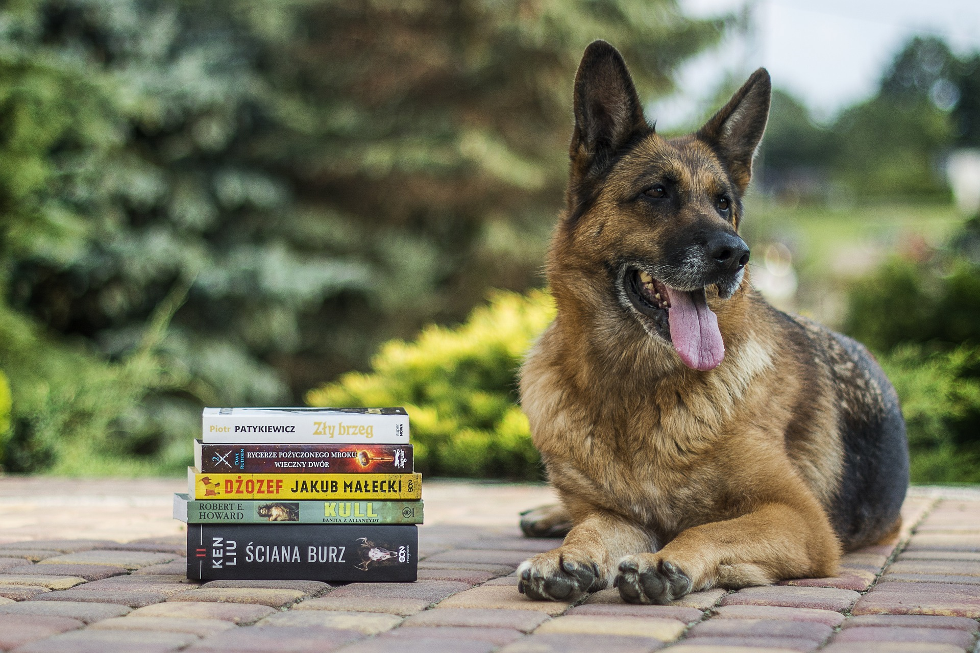 Paws for Love:  Read to a Dog
