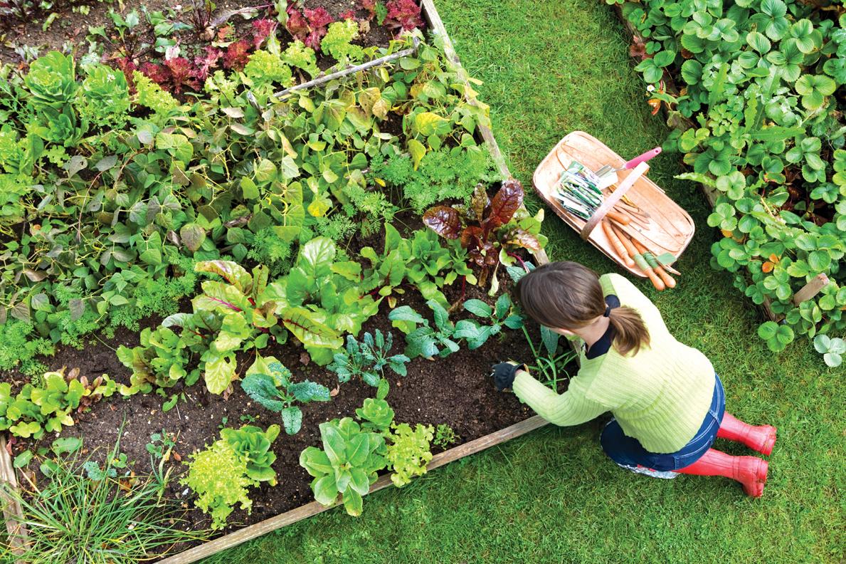 Conversations in the Garden